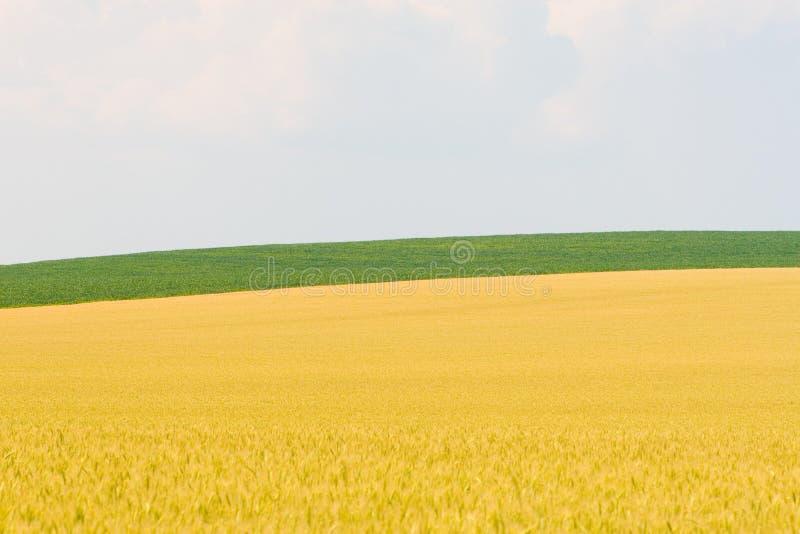 guldgreen royaltyfri bild