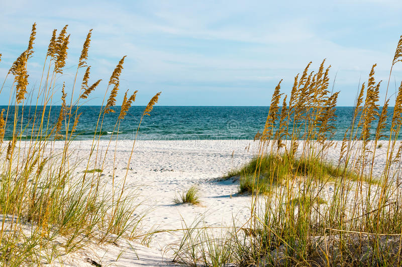 Gulf Coast royalty free stock photo