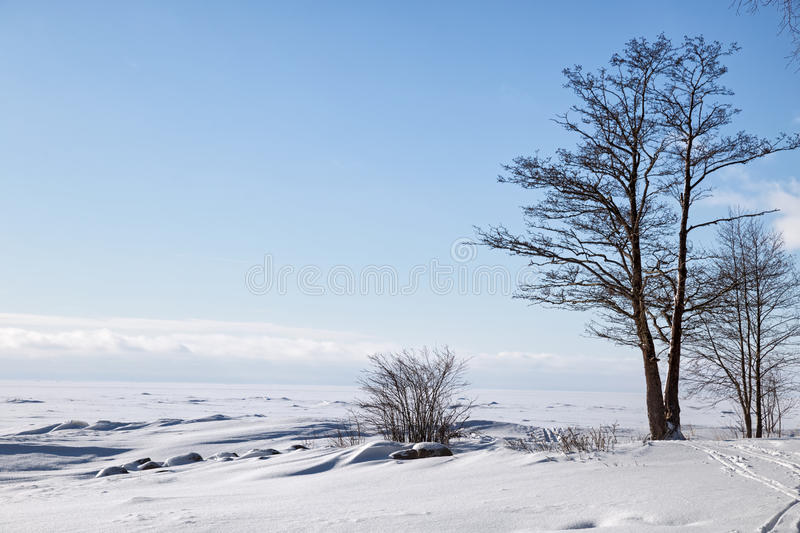 Gulf of Finland in winter stock image