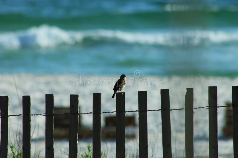 Gulf of Mexico bird on a fence stock photography