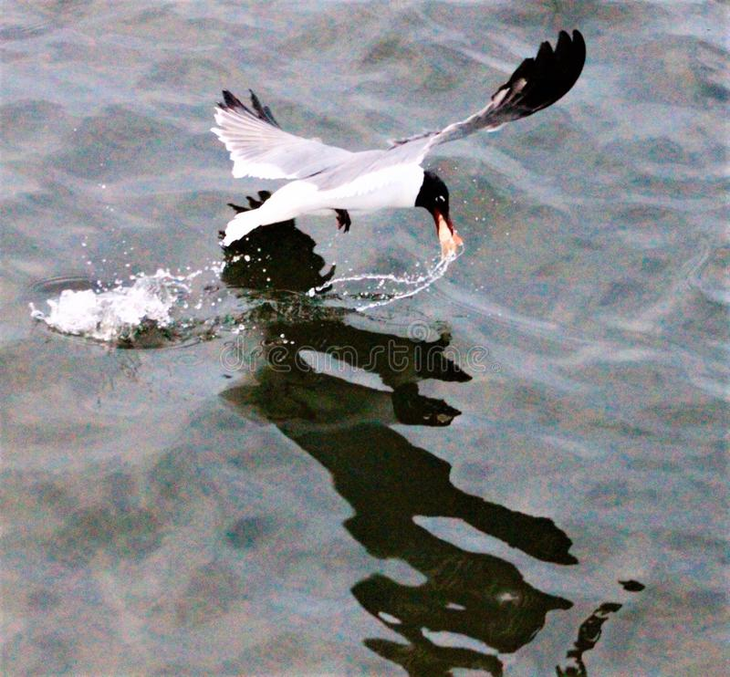 Gulf of Mexico with a seagull stock photos