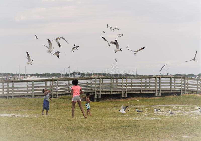 Gulfport, Florida, April 2018 African American kids are feeding and playing with seagulls royalty free stock images