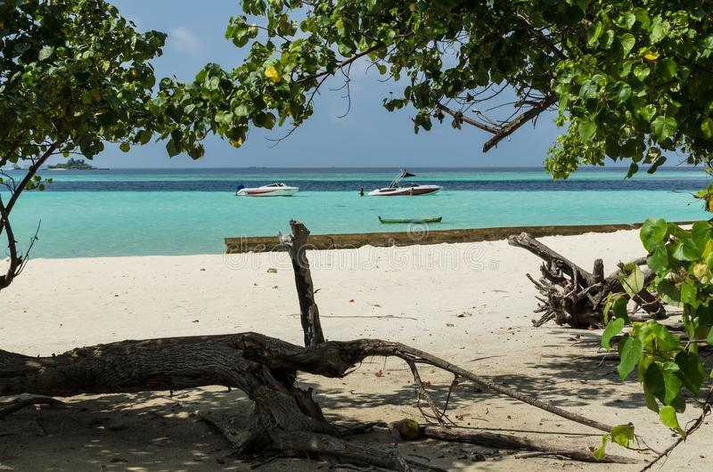 GULHI island, MALDIVES – November 17, 2017: Beautiful beach on Maldives with old tree, white sand and divers in the blue Indian stock image