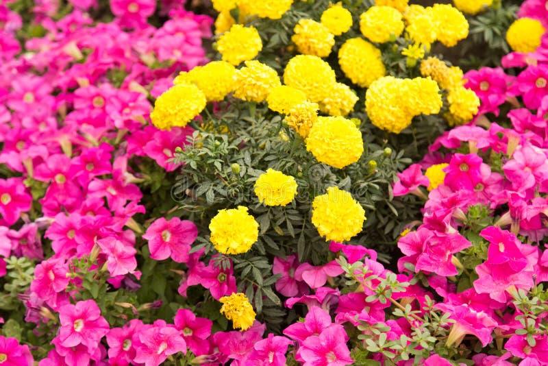 Download Guling blommar i natur fotografering för bildbyråer. Bild av avstånd - 106831915