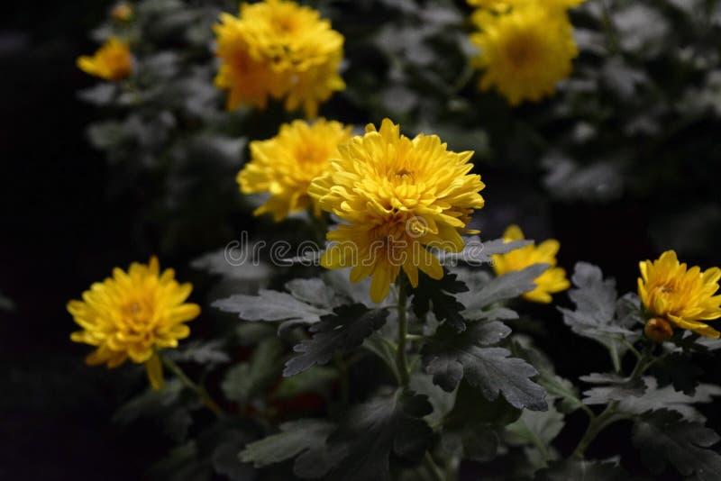 Guling blommar i skog royaltyfria bilder