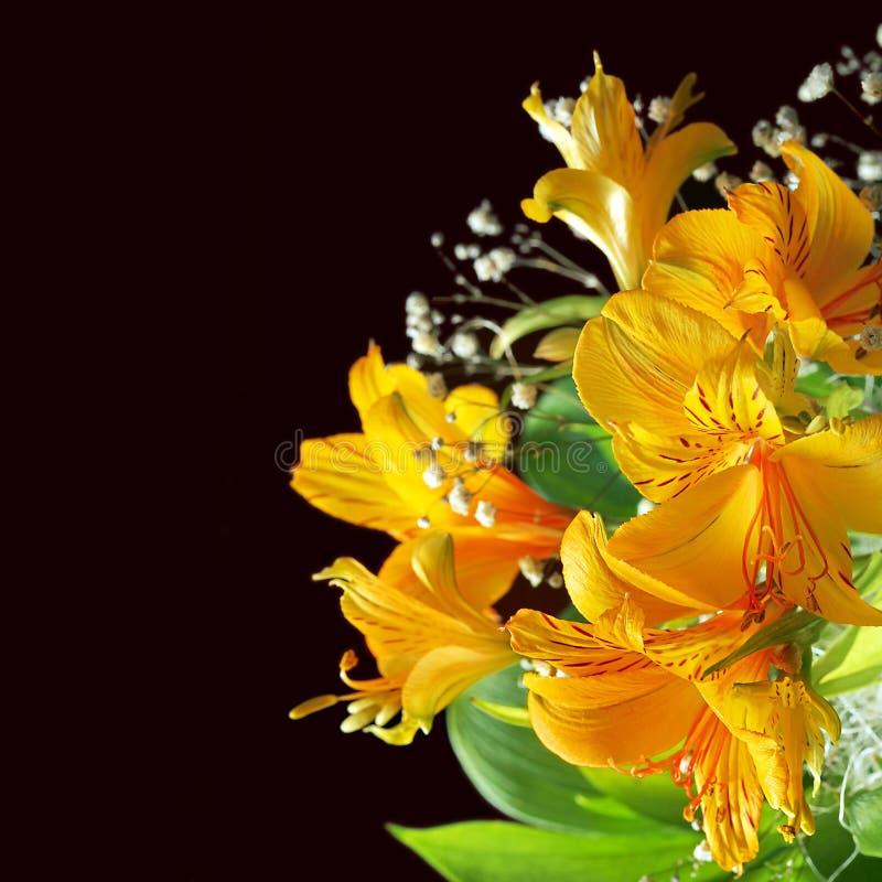 Guling blommar med svart bacground royaltyfri foto