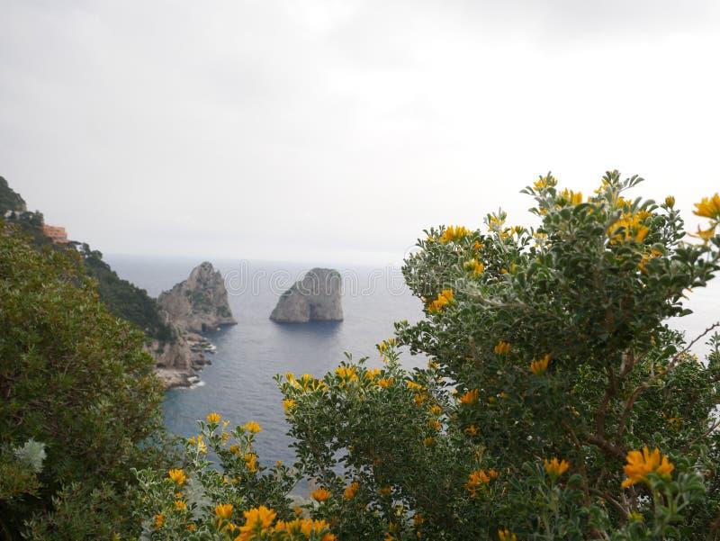 Guling blommar på buskar på kusten royaltyfri foto