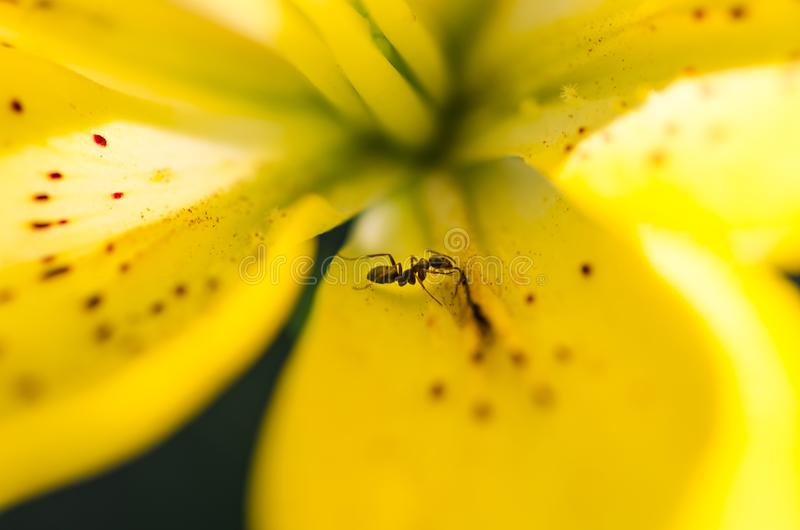 Guling blommar upp bakgrundsslut fotografering för bildbyråer