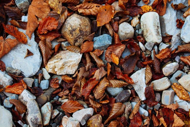 Guling för landskapet för solen för träd för hösten för vatten för skogen för stenvattenfallreflexionen parkerar sidor arkivbilder