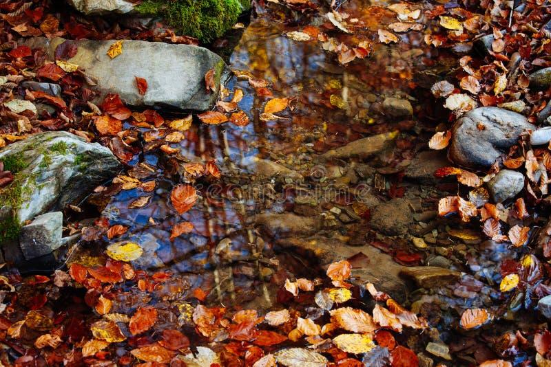 Guling för landskapet för solen för träd för hösten för vatten för skogen för stenvattenfallreflexionen parkerar sidor royaltyfri foto