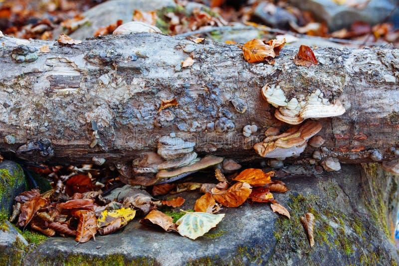 Guling för landskapet för solen för träd för hösten för vatten för skogen för stenvattenfallreflexionen parkerar sidor royaltyfri bild