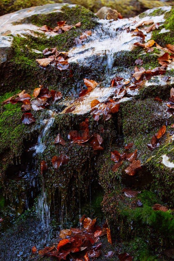 Guling för landskapet för solen för träd för hösten för vatten för skogen för stenvattenfallreflexionen parkerar sidor royaltyfria bilder