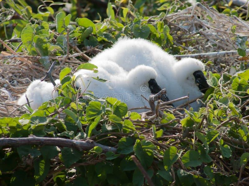 Guling fakturerade storkfågelungar royaltyfri fotografi