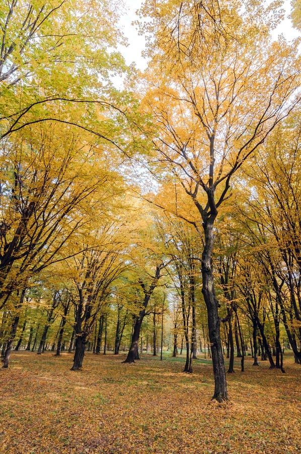 Guling- och gräsplanträd i hösten parkerar arkivfoton