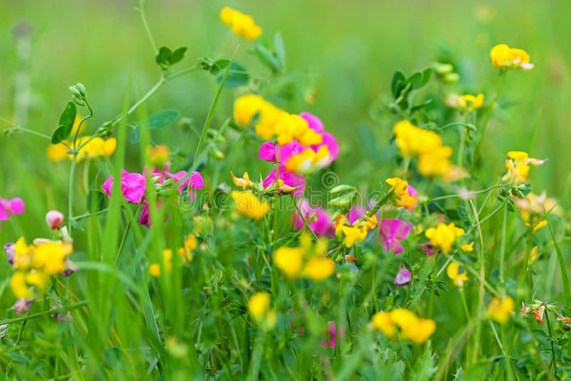 Guling och röda lösa blommor royaltyfri foto