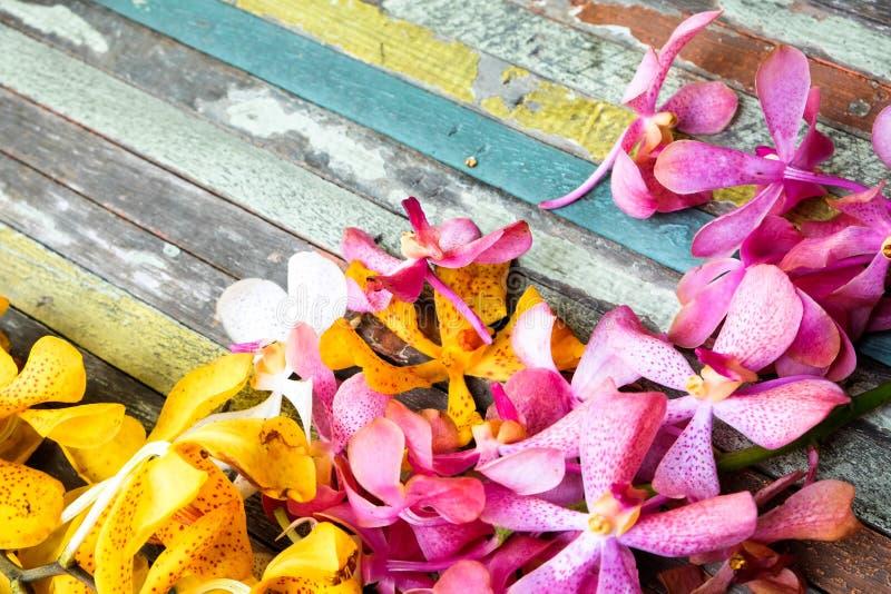 Guling och rosa färgen blommar på färgrikt trä arkivbild