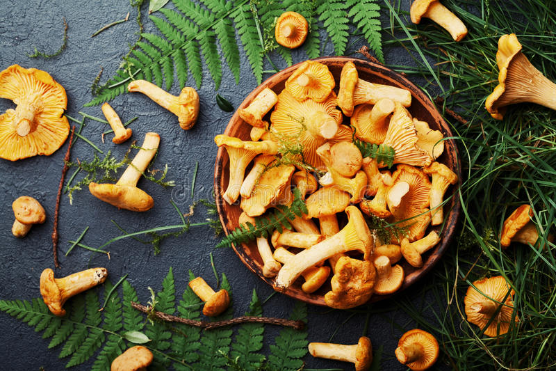 Guling plocka svamp kantarellcantharelluscibarius i bunken dekorerade ormbunke- och skogväxter på svart bästa sikt för köksbord royaltyfria foton