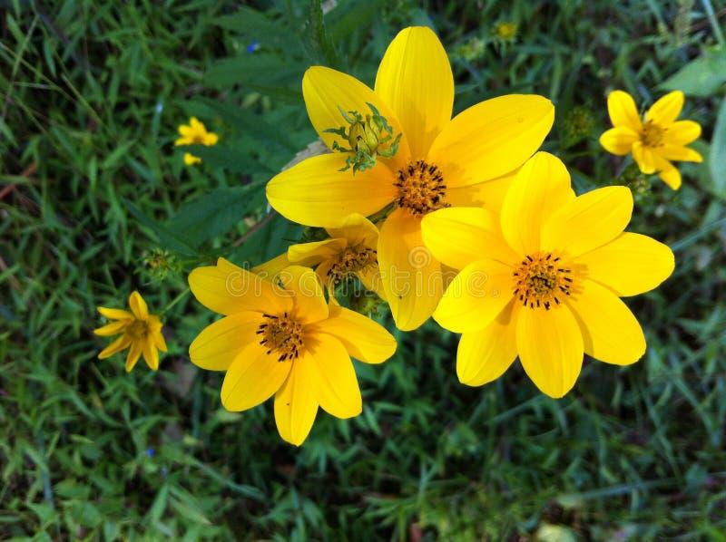 Gulingen fj?drar blommor fotografering för bildbyråer