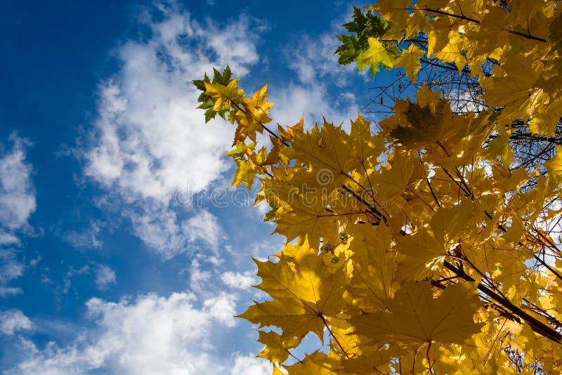 Gulingsidor mot den blåa himlen arkivbilder