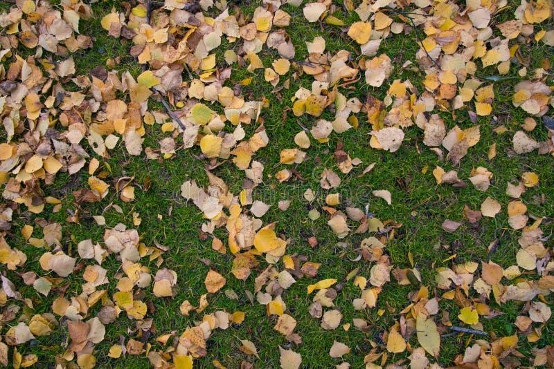 Gulingsidor på det gröna gräset royaltyfria foton