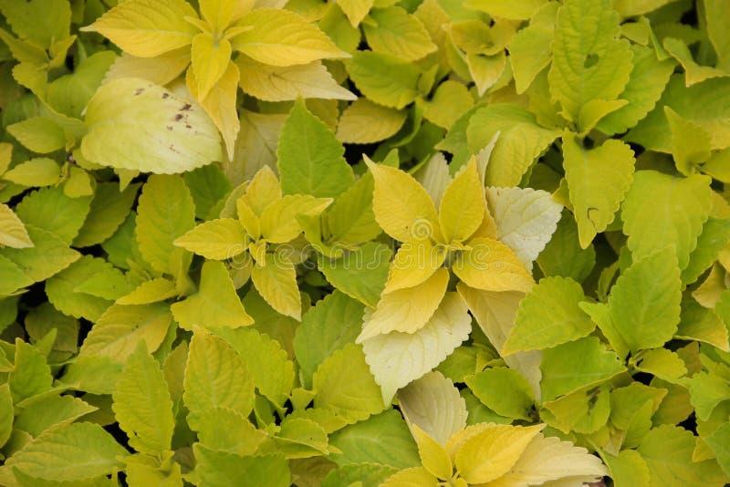 Gulingväxter royaltyfri fotografi