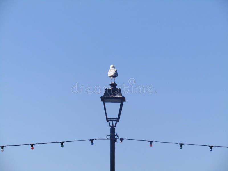 Gull's眼睛视图 库存图片