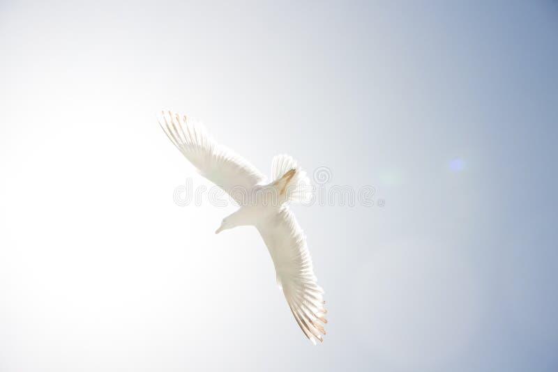 gull stock fotografie