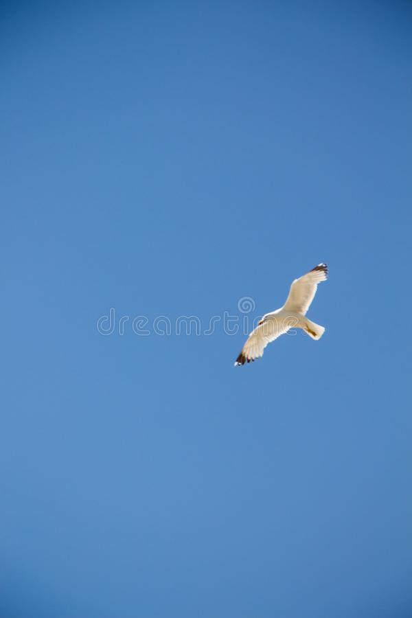 gull fotos de stock royalty free