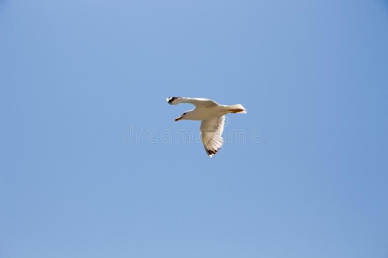 gull stock foto's