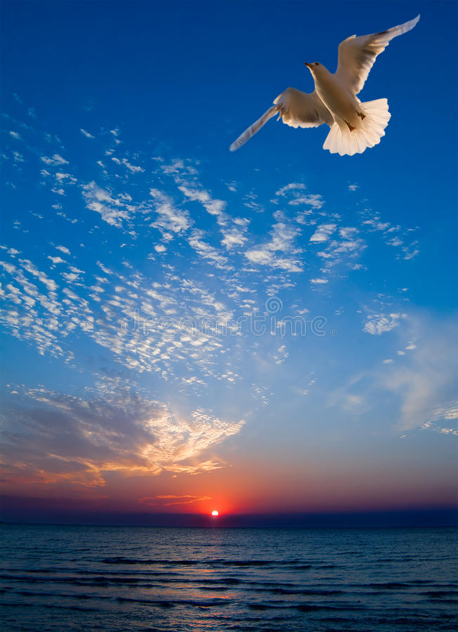 Download Gull stock image. Image of reflection, gull, clouds, beauty - 13487729