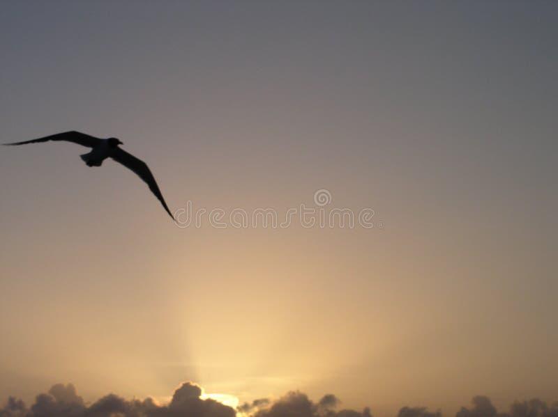Gull Royalty Free Stock Photos