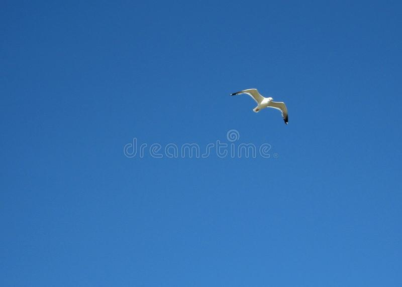 Download Gull imagen de archivo. Imagen de recorrido, cielo, belleza - 44855201