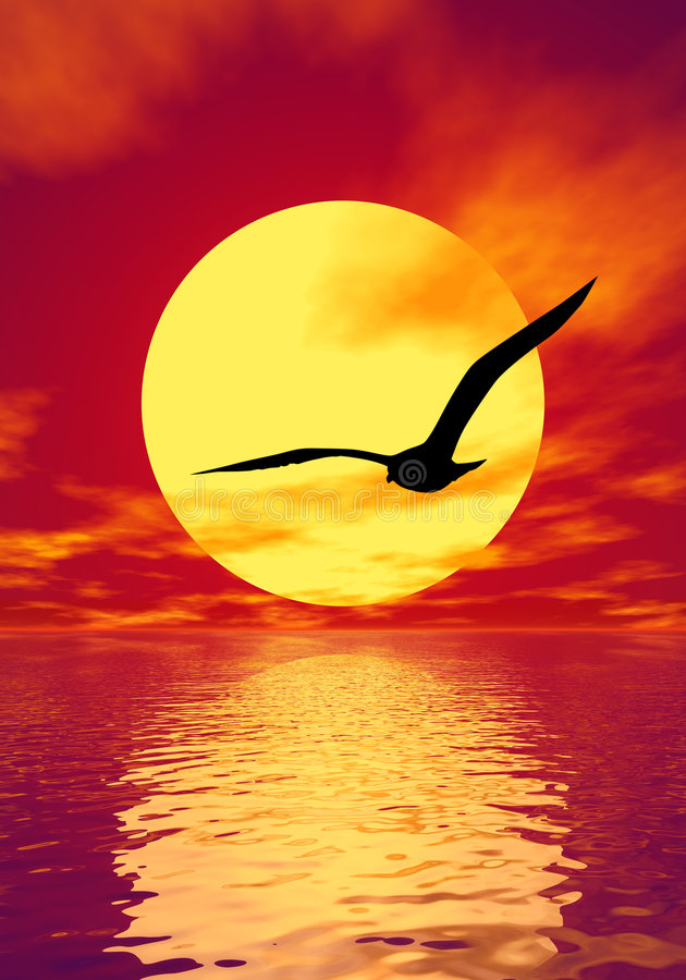 Gull. Silhouette and scarlet sunset vector illustration
