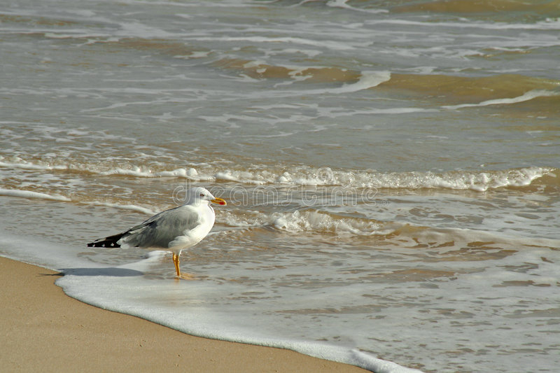 Download Gull in the beach stock photo. Image of ocean, bird, fight - 667502