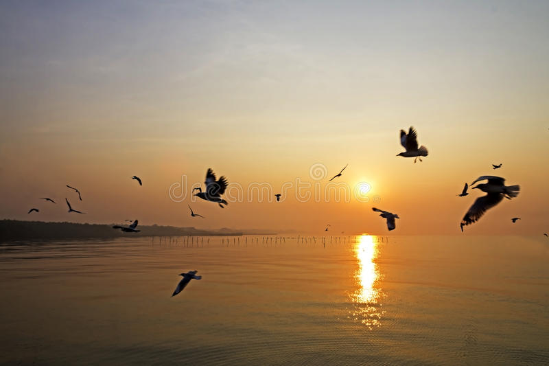 Gull fly action with sunrise royalty free stock photo