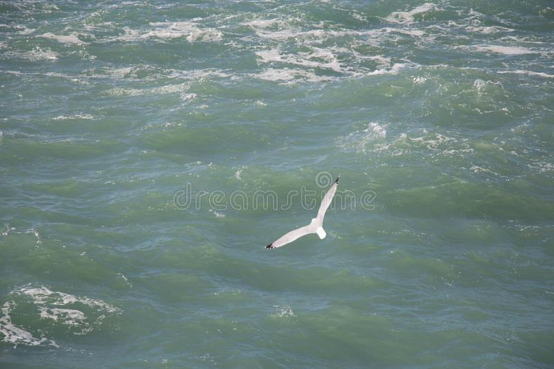 A gull is flying above sea waves stock image