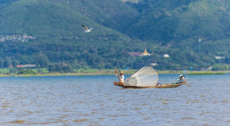 Gull flying in front of a Fisherman at Inle Lake royalty free stock image