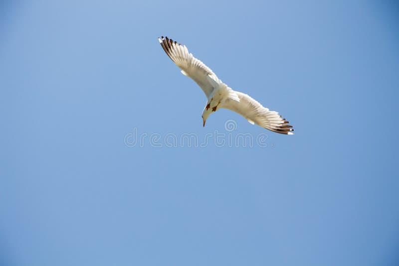 Gull. stock images
