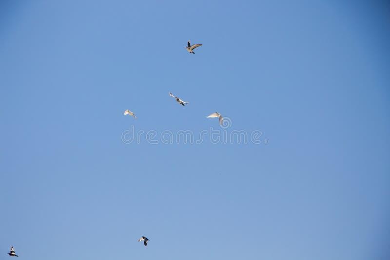 Gull. stock photos