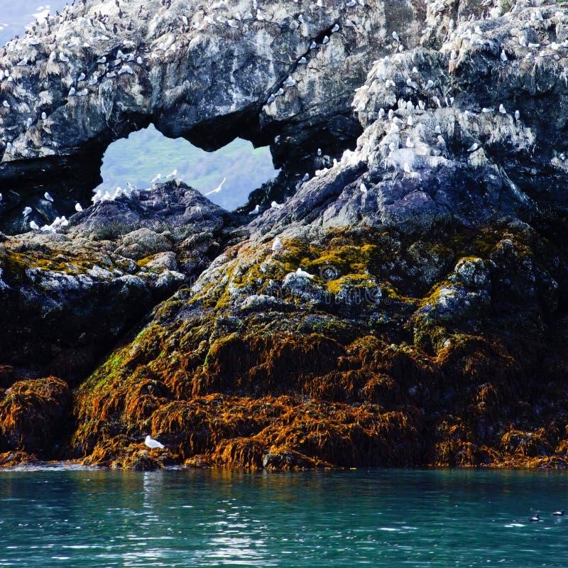 Gull Island (Kachemak Bay, Alaska) royalty free stock images