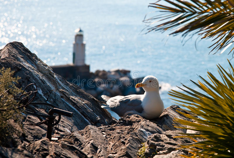 Download The Gull And The Lighthouse Stock Photo - Image: 13295110