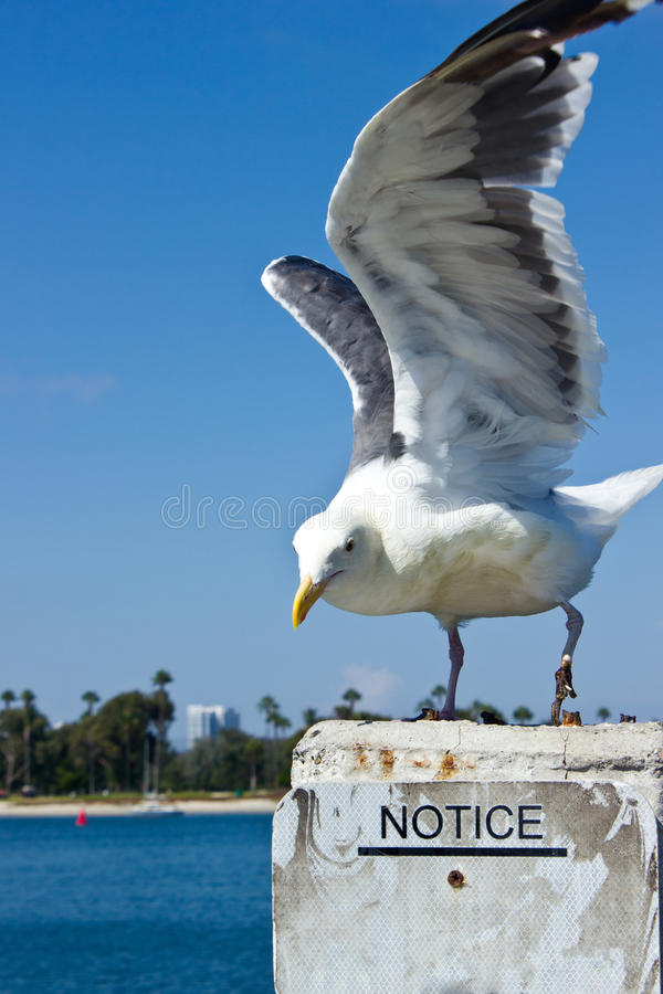 Gull Notice Stock Photo