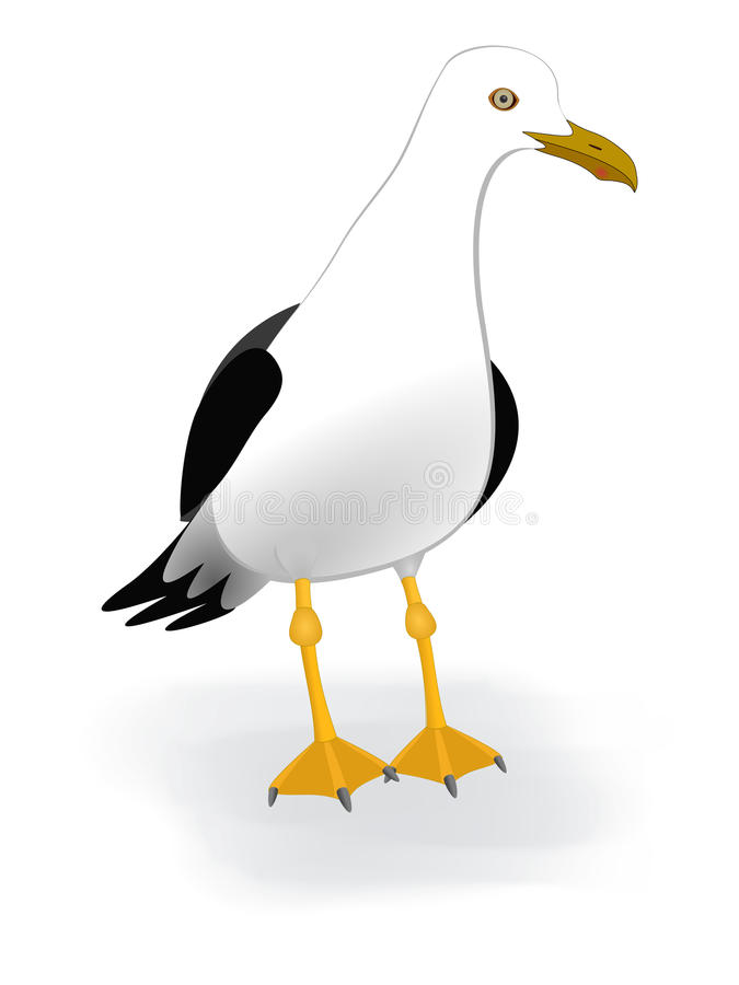 Gull o pássaro atado curto da gaivota da fauna da praia do mar do albatroz do vetor com tema preto e branco Grea da vida marinha  ilustração royalty free