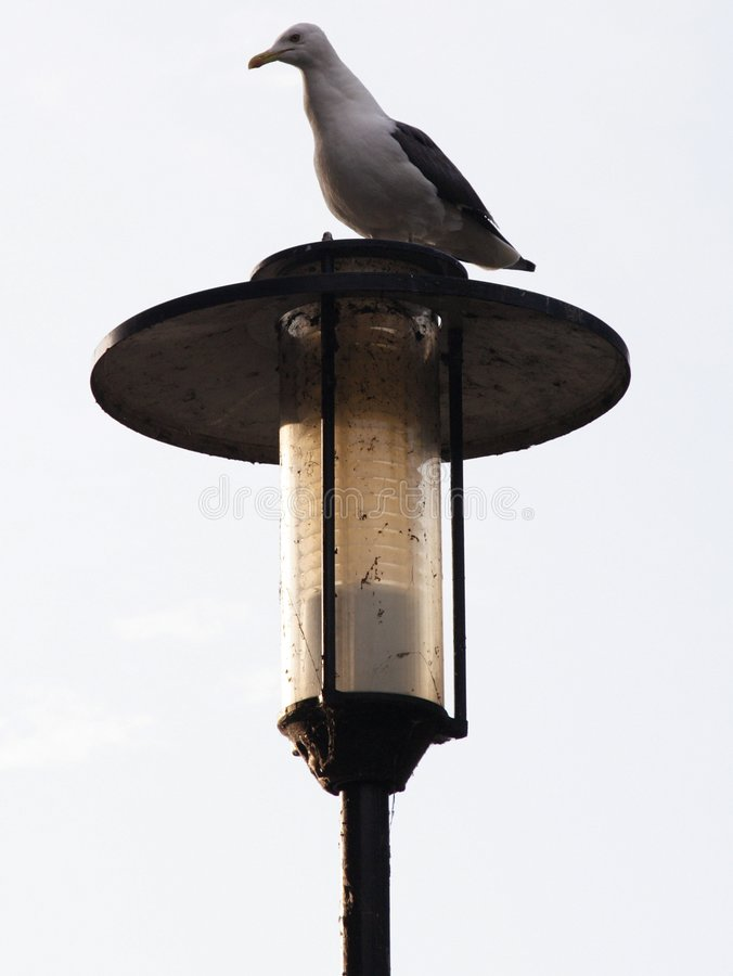 Gull On Post Stock Images