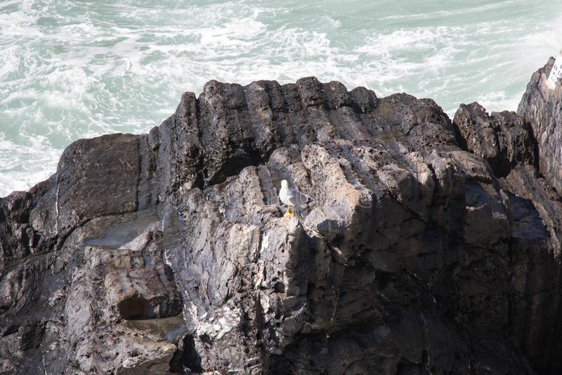 A gull on a rock with sea on background stock photography