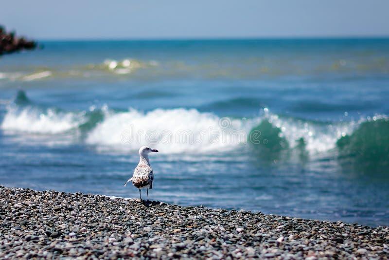 Gull and sea stock photo