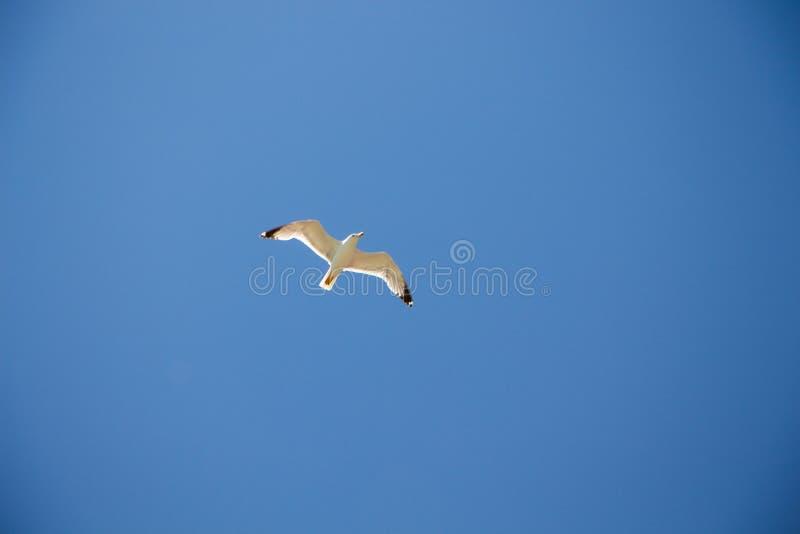 Gull. stock photography