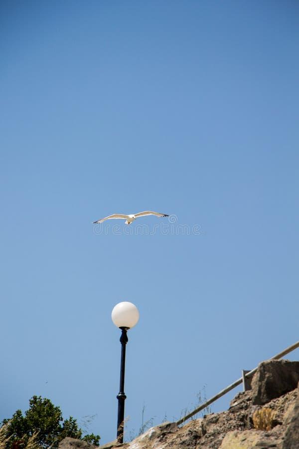 Gull. royalty free stock photos