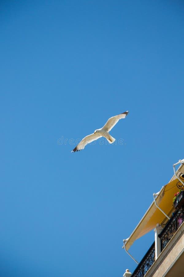 Gull. stock image
