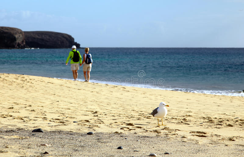 Download Gull at the seashore stock photo. Image of larus, beautiful - 38202370
